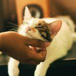 5 choses que les chats détestent chez les humains