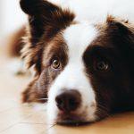 Comment laver son chien à la maison sans le mouiller ?
