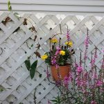 D'où vient l'utilisation de treillage dans les jardins ?